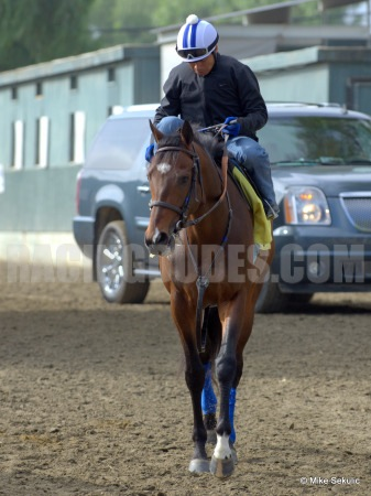Paynter Going to the Track