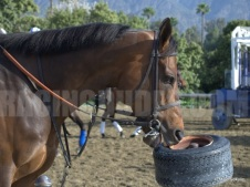 Game On Dude Enjoys a Tire