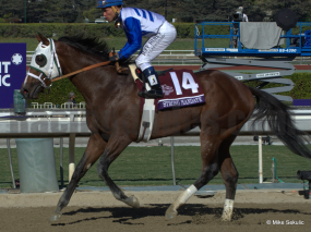 Strong Mandate will enter 2014 as the Hype Horse at Oaklawn