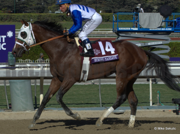 Strong Mandate Headlines the Southwest Stakes