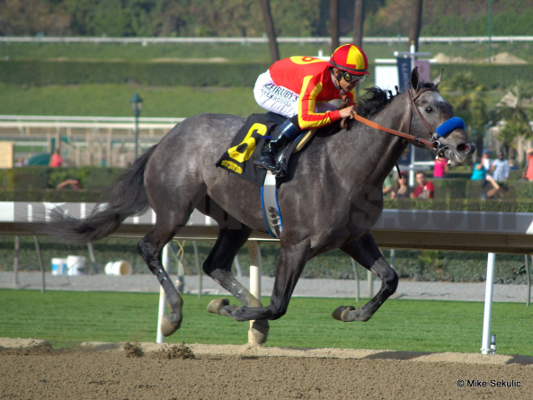 Midnight Hawk looks to bounce back in the $800,000 Sunland Derby (Gr. III) on Sunday