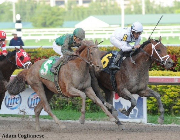 Commissioner edges Top Billing by a neck in highly-rated allowance race for 3-year-olds in January. These guys face each other again in the Fountain of Youth at Gulfstream Park on Saturday.