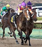 "Euphrosyne ""Wins"" the Honeybee Stakes"